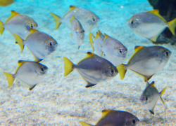 Without additional conservation efforts by the international community many marine species may face extinction. Image Source: Public Domain Images