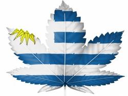 Uruguay flag marijuana leaf