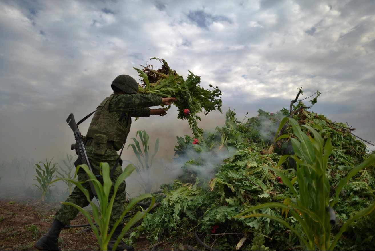 A Mexican soldier destroying opium poppies in Navalato, Sinaloa State. The New York Times. Fernando Brito.
